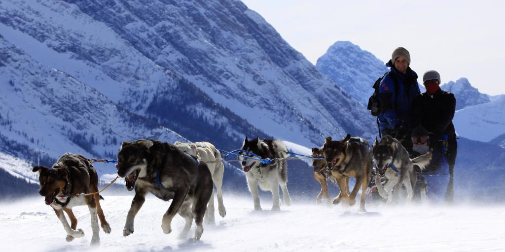 Sled dog adventures in Kananaskis Country