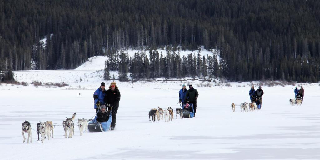 Canmore & Banff sled dog teams with Howling Dog Tours