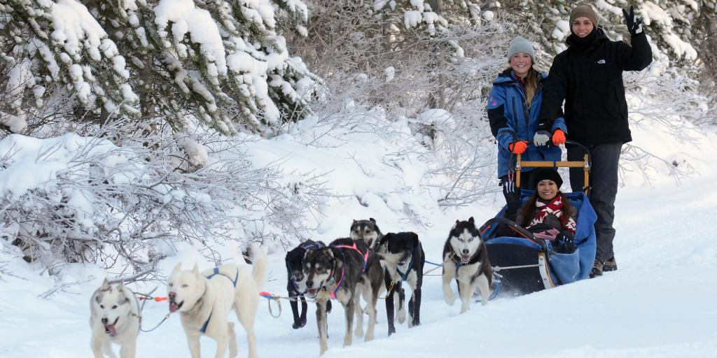 Dog sledding team and guide near Canmore / Banff