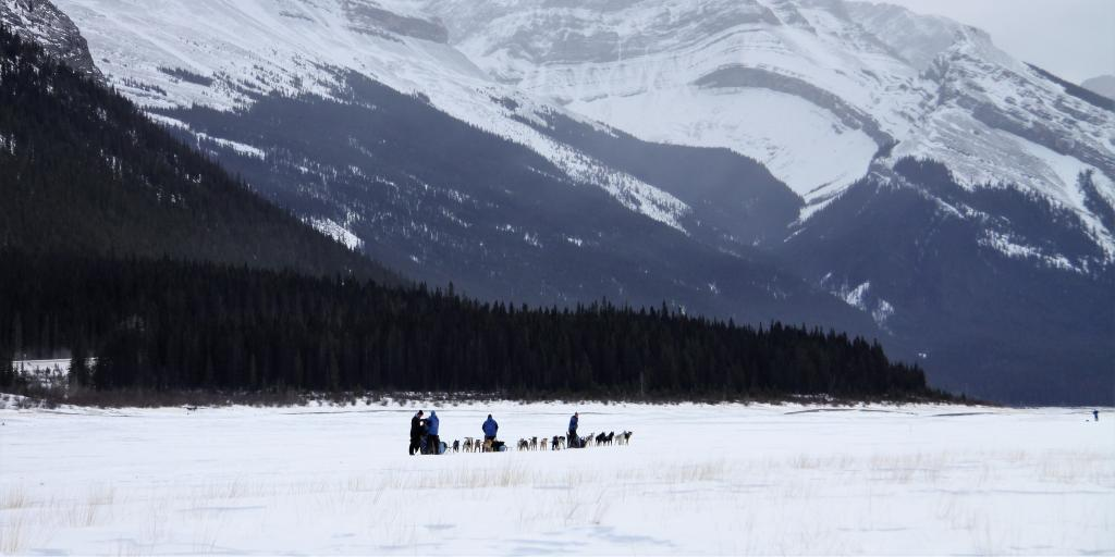 Dog sledding in Spray Lakes Provincial Parks, 30 min from Canmore